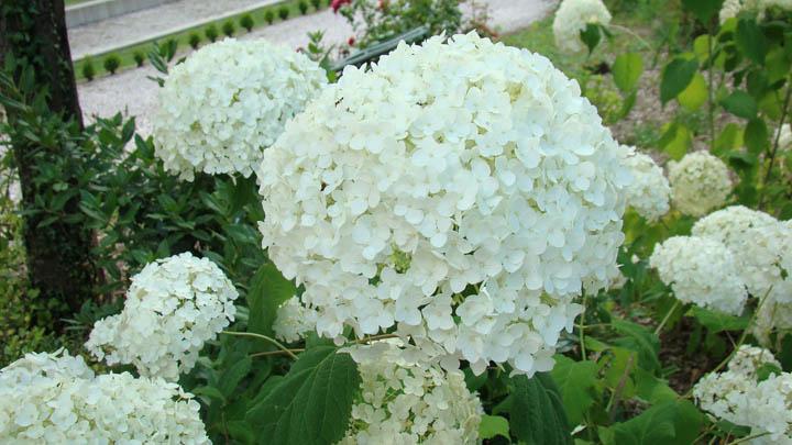 flower_CR