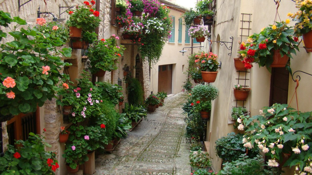 spello_flowers