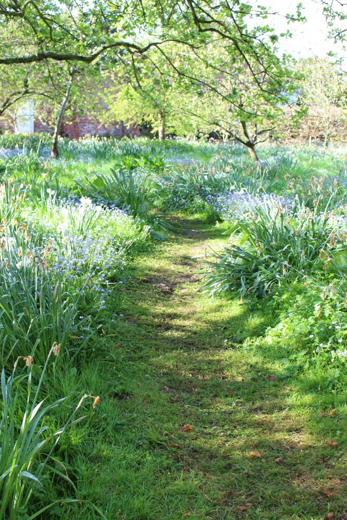 blue_meadow_path