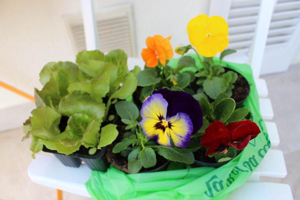 flowers_lettuce